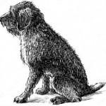 Santé chiens: comment prendre soin d'un chien âgé ?