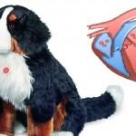 Qu'est-ce que le souffle cardiaque du chien ?
