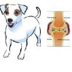 Santé chien: Les rhumatismes chez le chien