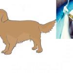 Dans quel cas peut-on faire euthanasier son chien ?