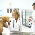 L'Accident Vasculaire Cérébral (AVC) chez le chien
