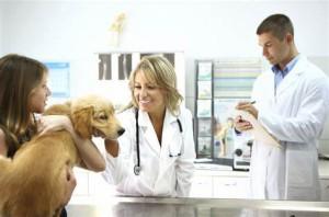 mutuelle santé chien