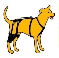 rupture ligaments croisés chien