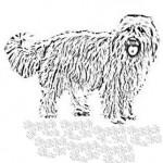 La chute des poils du chien