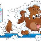 Tout savoir sur les pellicules et les mauvaises odeurs du chien