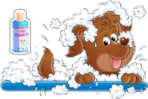 shampooing chien