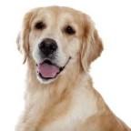 Mutuelle chien Joux Assurances