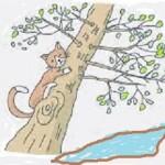 La garantie parachute : une option de l'assurance chat