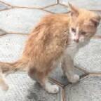 Ce qui est à savoir sur le coryza du chaton