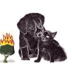 Guide sur la crémation d'un animal domestique